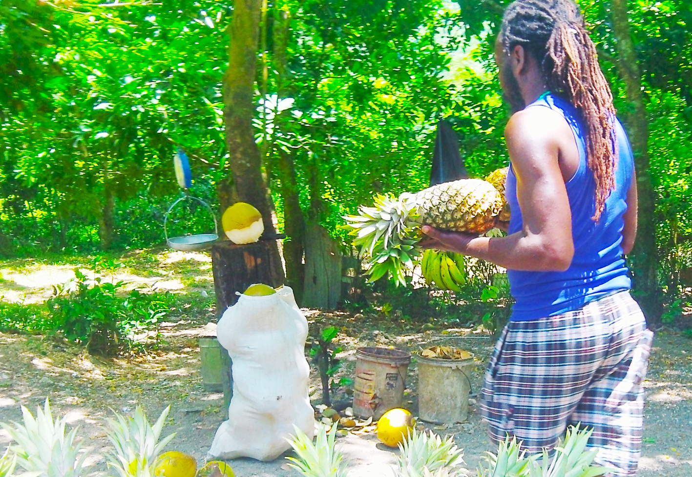 jamaikanische k252che 187 jamaika rezepte zum nachkochen