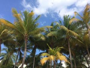 Jamaikareisen