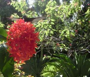 Kolibri Garten Jamaikatour