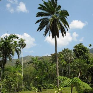 Ocho Rios, Jamaika, Castleton Garden
