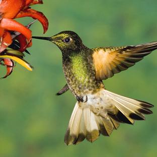 Montego Bay Rocklands Bird Sanctuary