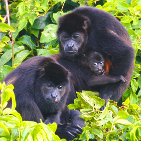 Costa Rica Reisen Erlebnisreise 15