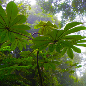 Costa Rica Reisen Erlebnisreise 5