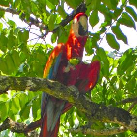 Costa Rica Reisen Erlebnisreise 6
