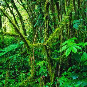 Costa Rica Rundreise zwei Ozeane 9