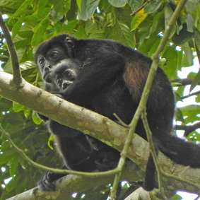 Costa Rica Urlaub Wunder 11