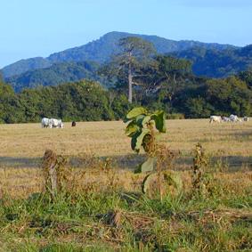Costa Rica Urlaub Wunder 3