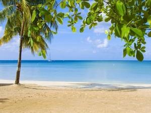 Jamaika 8
