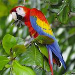 Erlebnisreisen Costa Rica