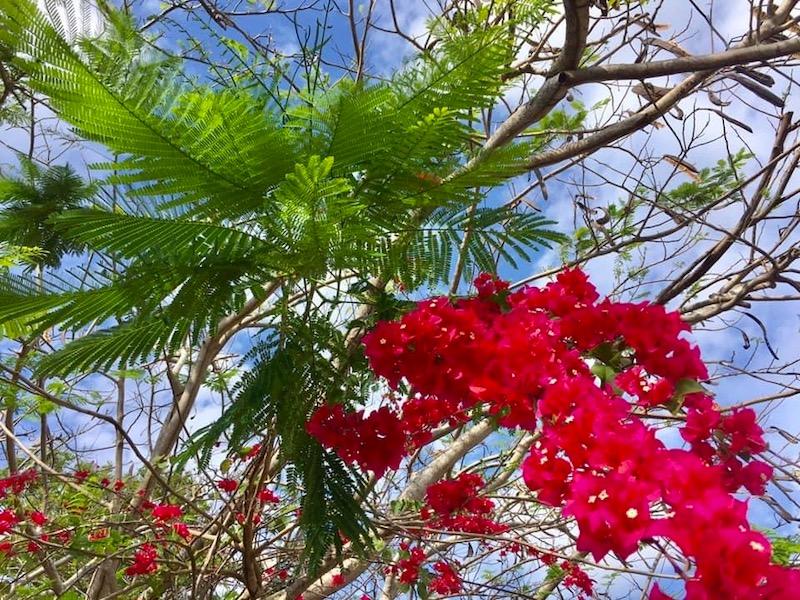 Urlaub in Jamaika