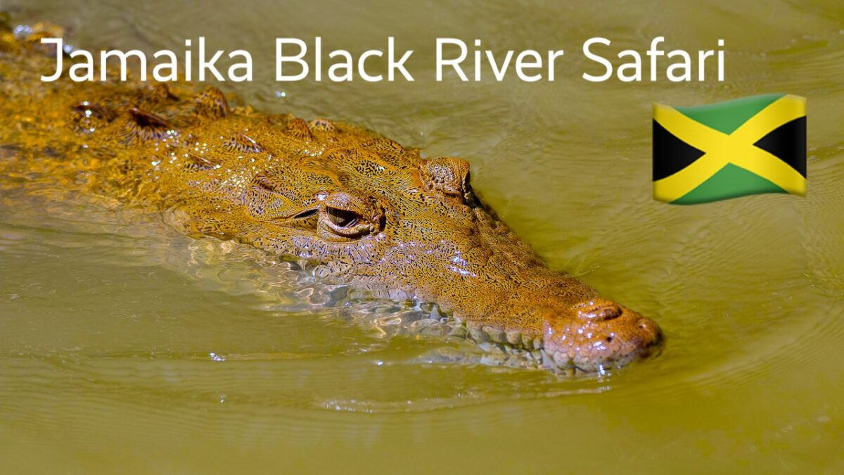 Jamaika Black River Safari