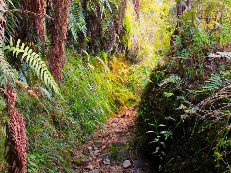 Jamaika Wanderreise zum Blue Mountain Peak